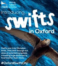 Swifts in Oxford